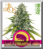 Royal Queen Royal Moby Feminised 10 Seeds